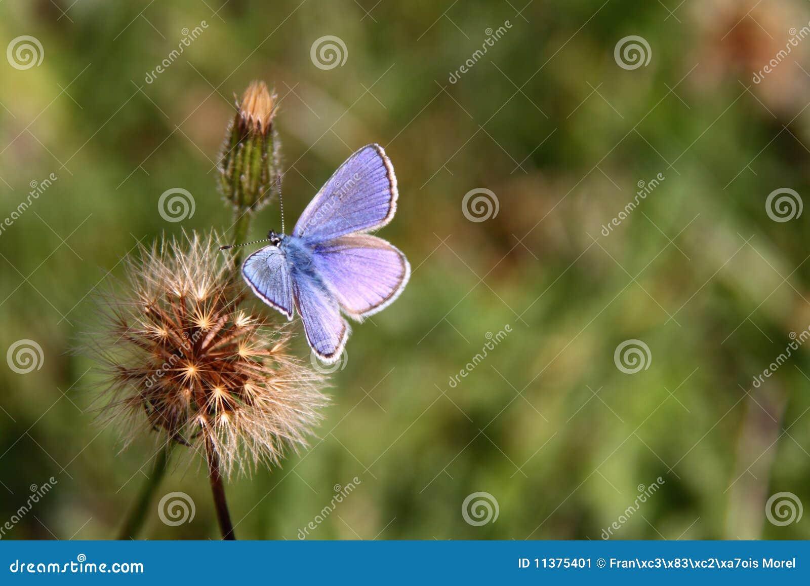 Guindineau-bleu-fleur-automne