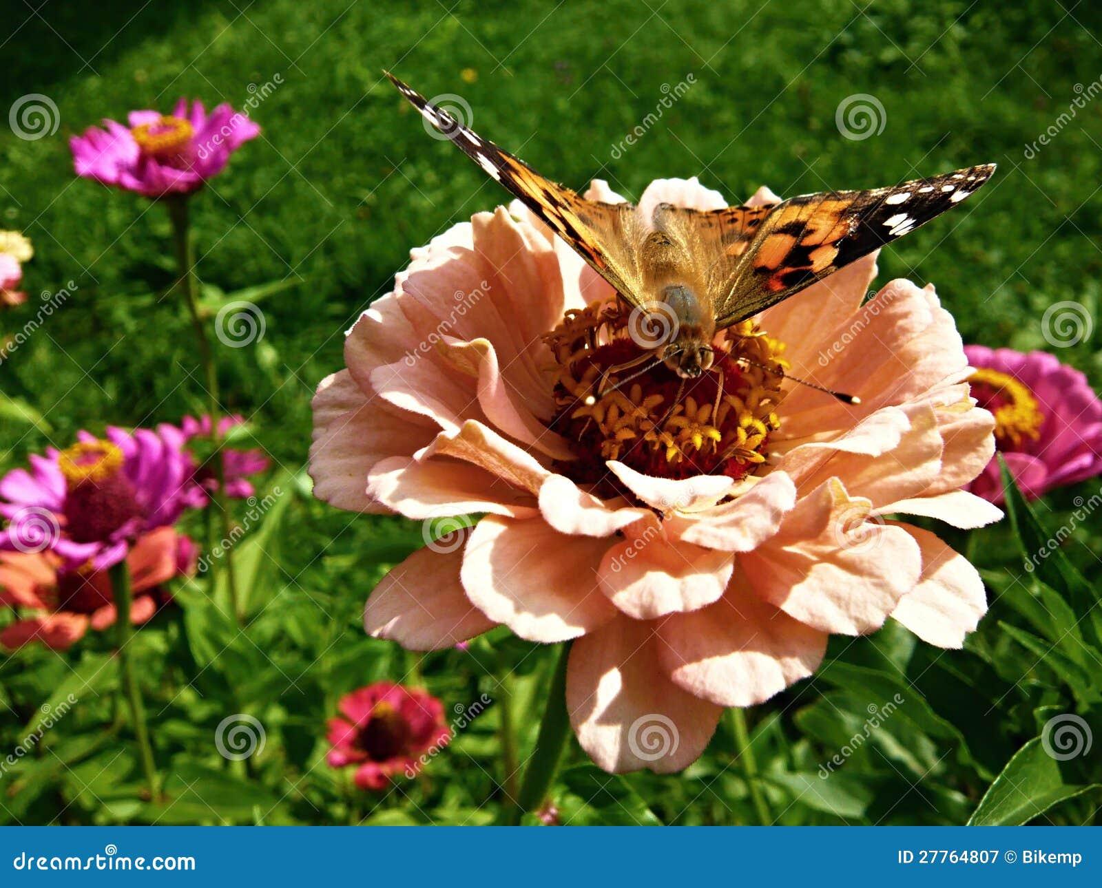 Guindineau sur une fleur