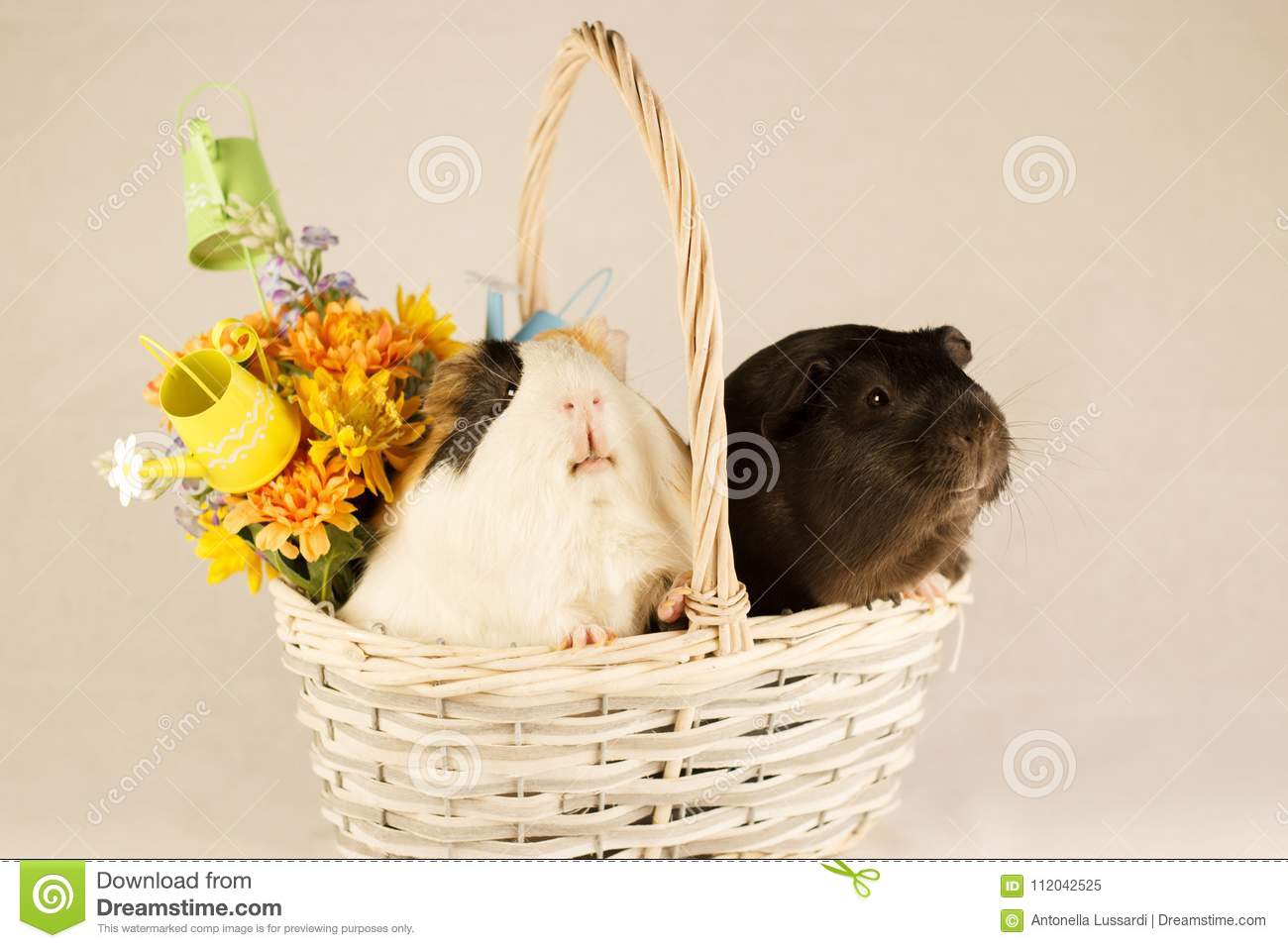 Guinea Pigs Happy Easter with Eggs