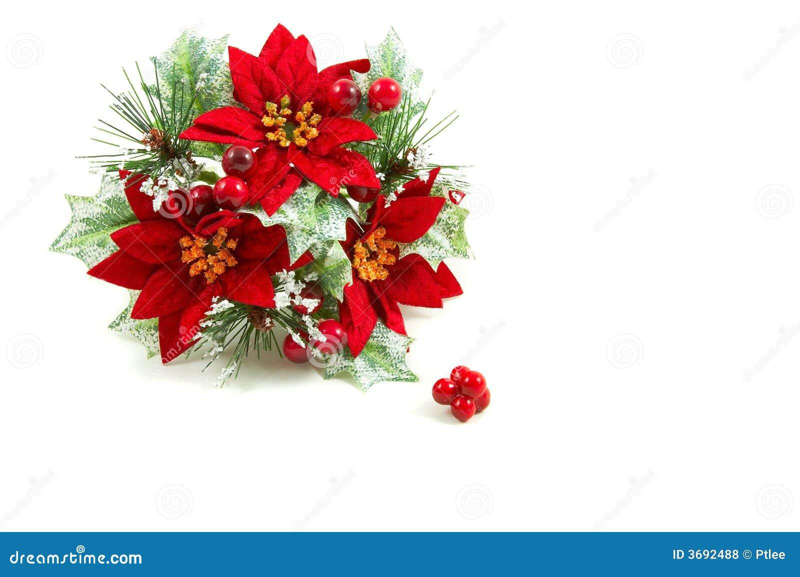 Guirnalda de la navidad flores del poinsettia foto de - Imagenes flores de navidad ...