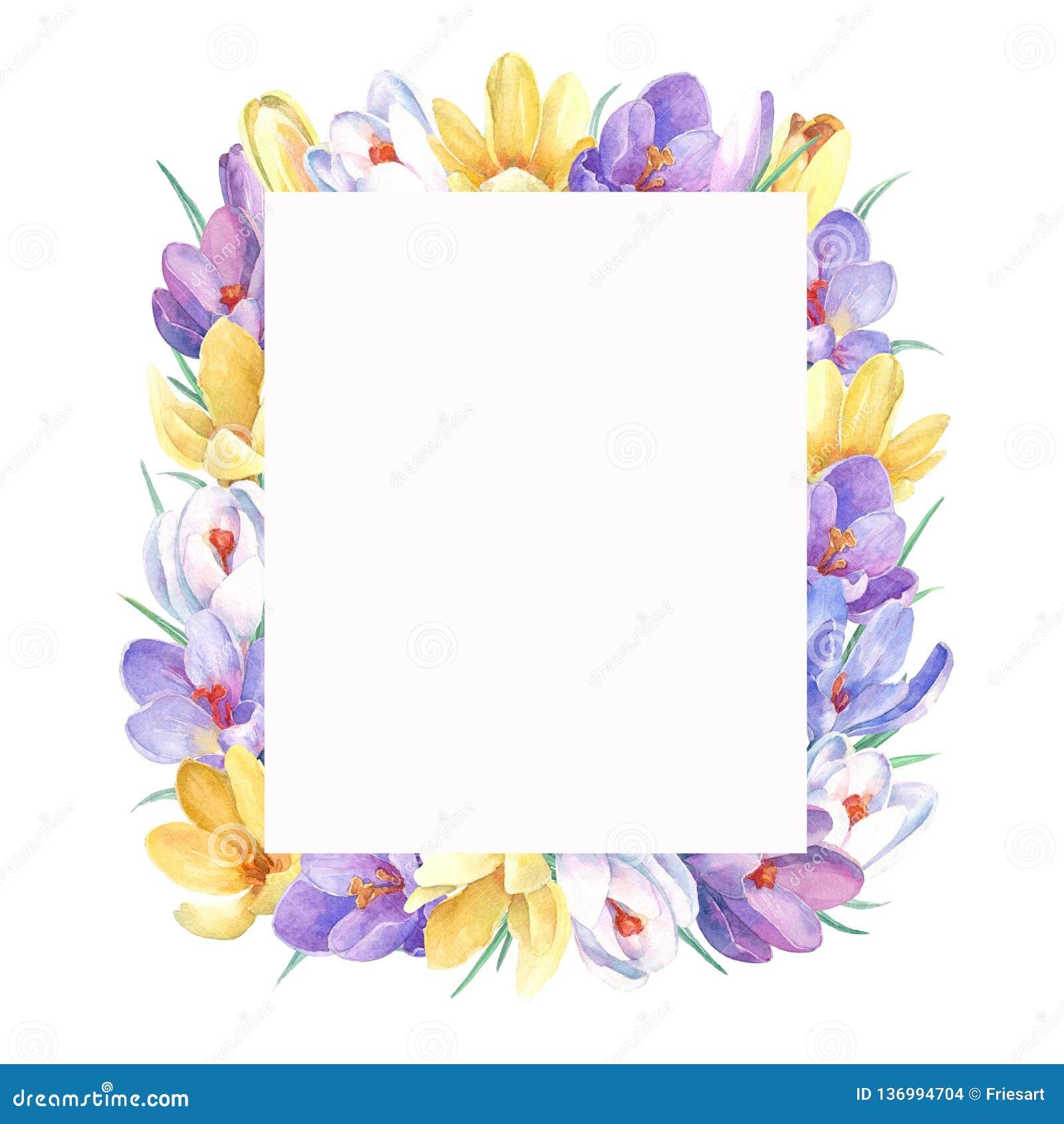 Guirnalda de la primavera con las flores coloridas del azafrán Marco de la primavera con las flores coloridas del azafrán