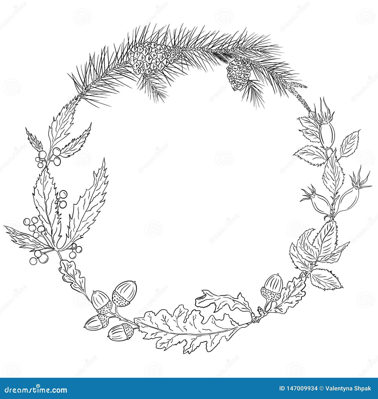 Guirnalda del otoño de las hojas y bellotas del roble, rosa salvaje, uvas de niña, ramas del pino y conos del pino