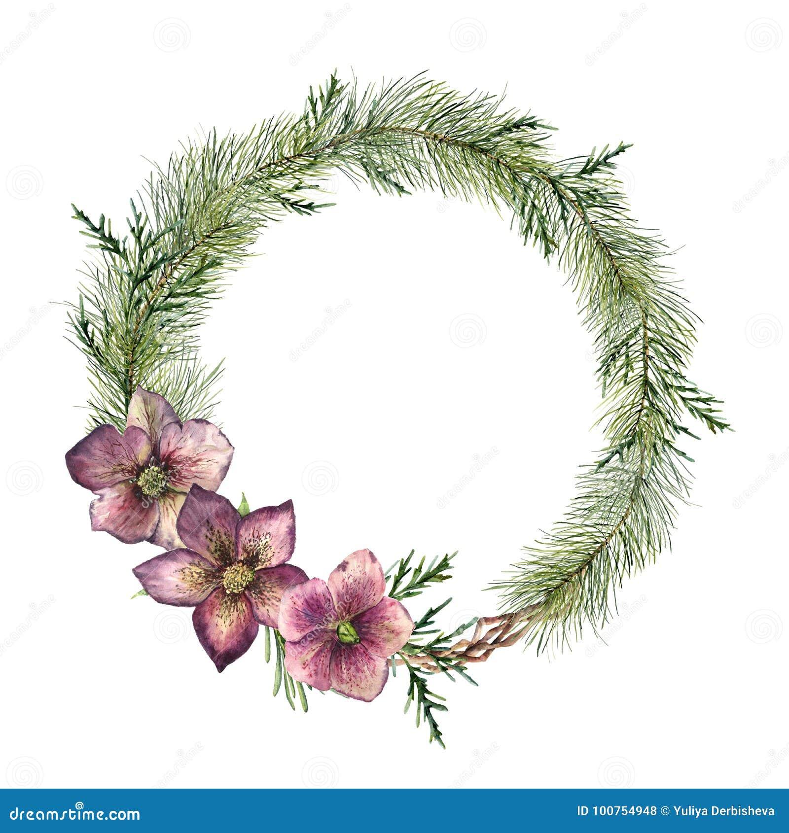 Guirnalda floral de la Navidad de la acuarela con las flores del hellebore Rama, cedro y hellebore pintados a mano de árbol de na