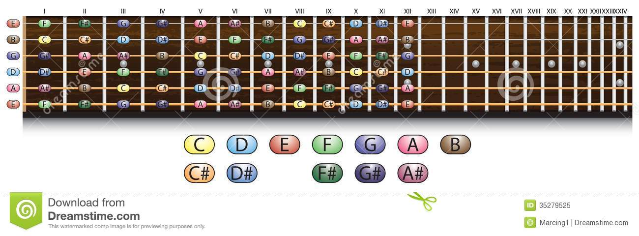 Guitar Fretboard Chart Stock Vector  Image Of Music  Note