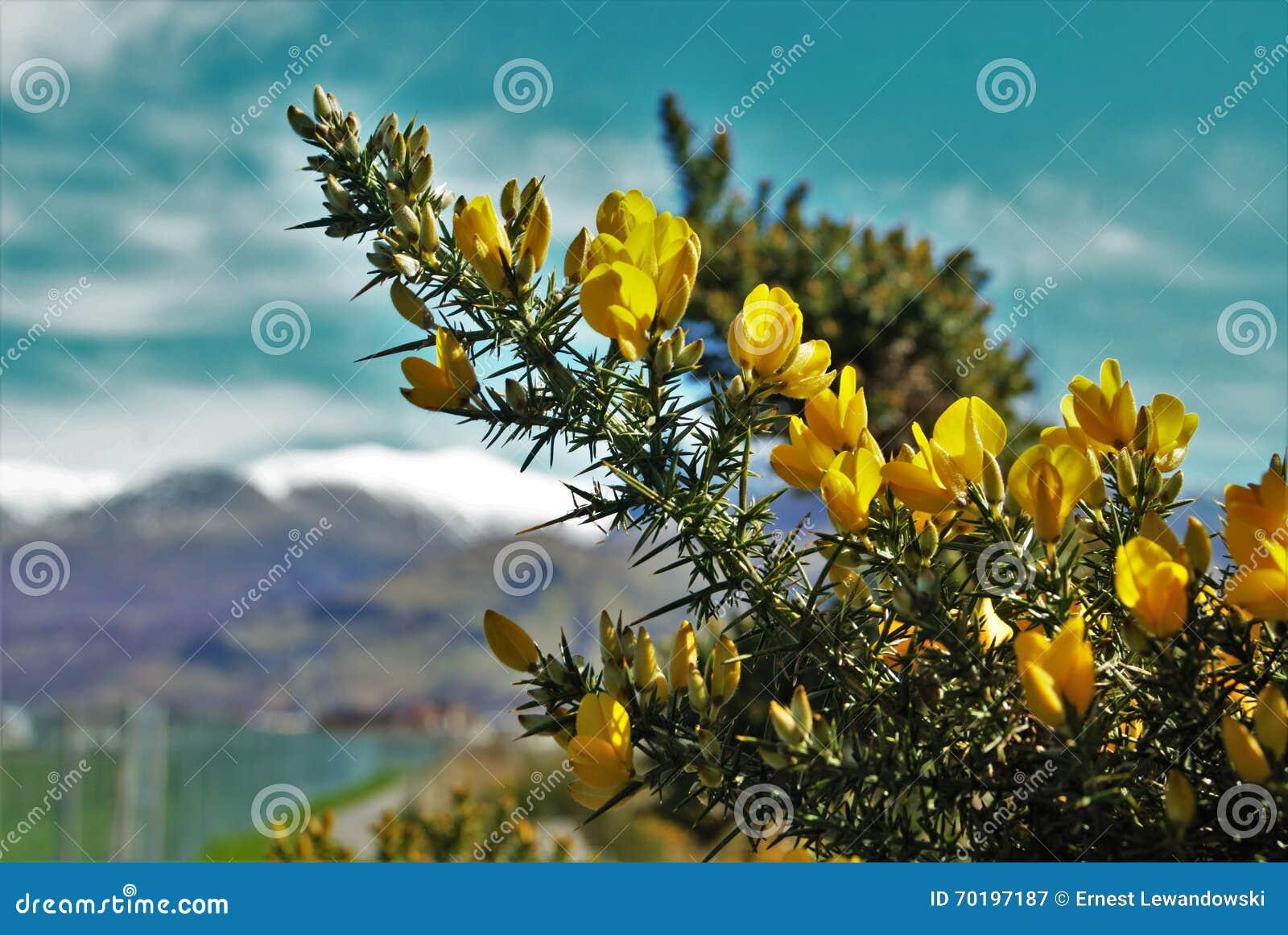 Gul blommamakro