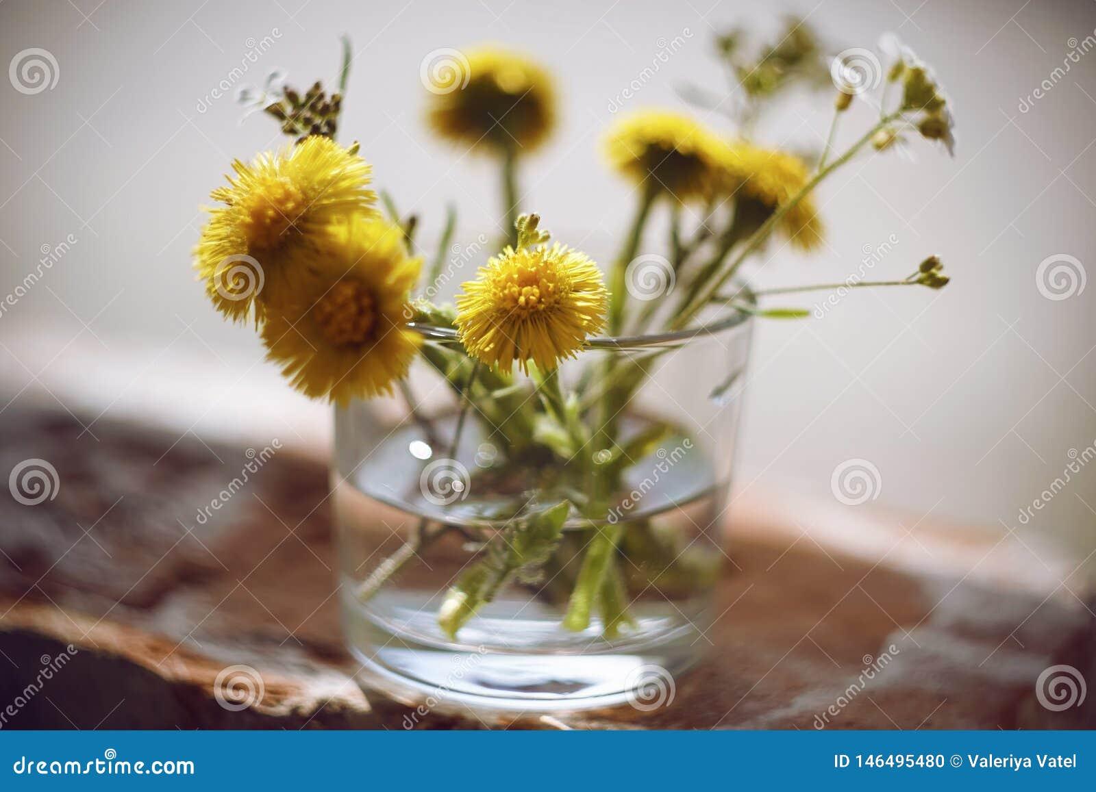 Gula och vita blommor är i en vas med vatten