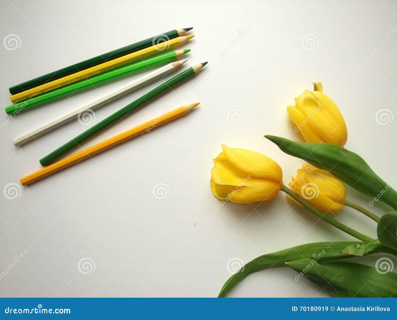Gula tulpan och blyertspennor