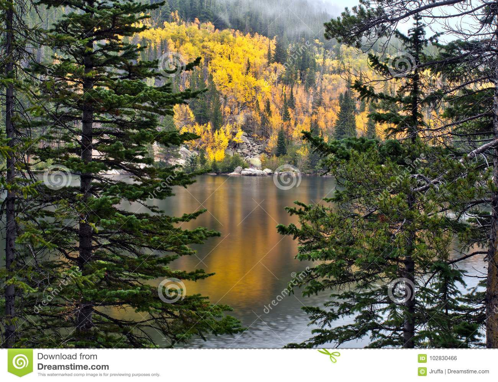 Guld- aspar i Rocky Mountain National Park