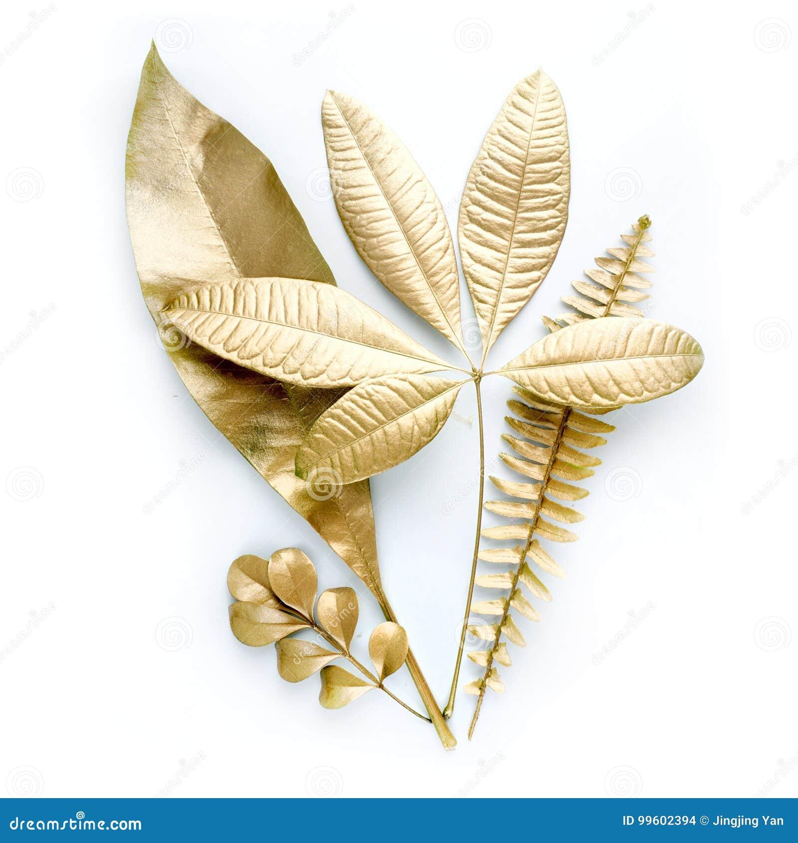 Guld- bladdesignbeståndsdelar Garneringbeståndsdelar för inbjudan, bröllopkort, valentindag, hälsningkort Isolerat på vit