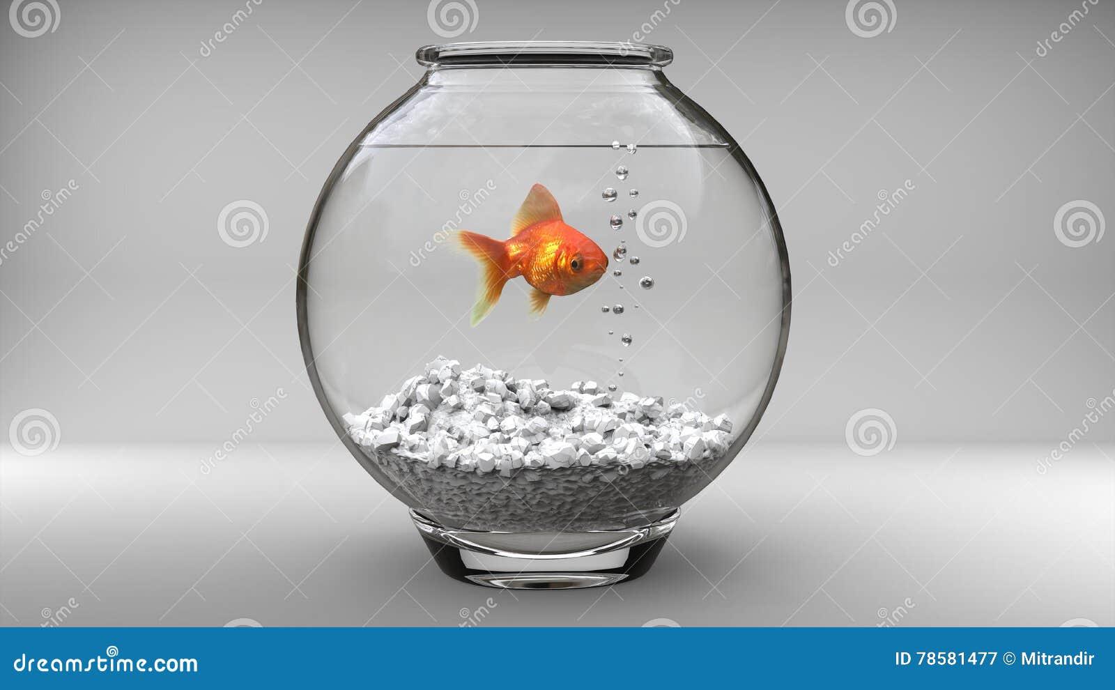 Guld- fisk i en liten fiskbunke