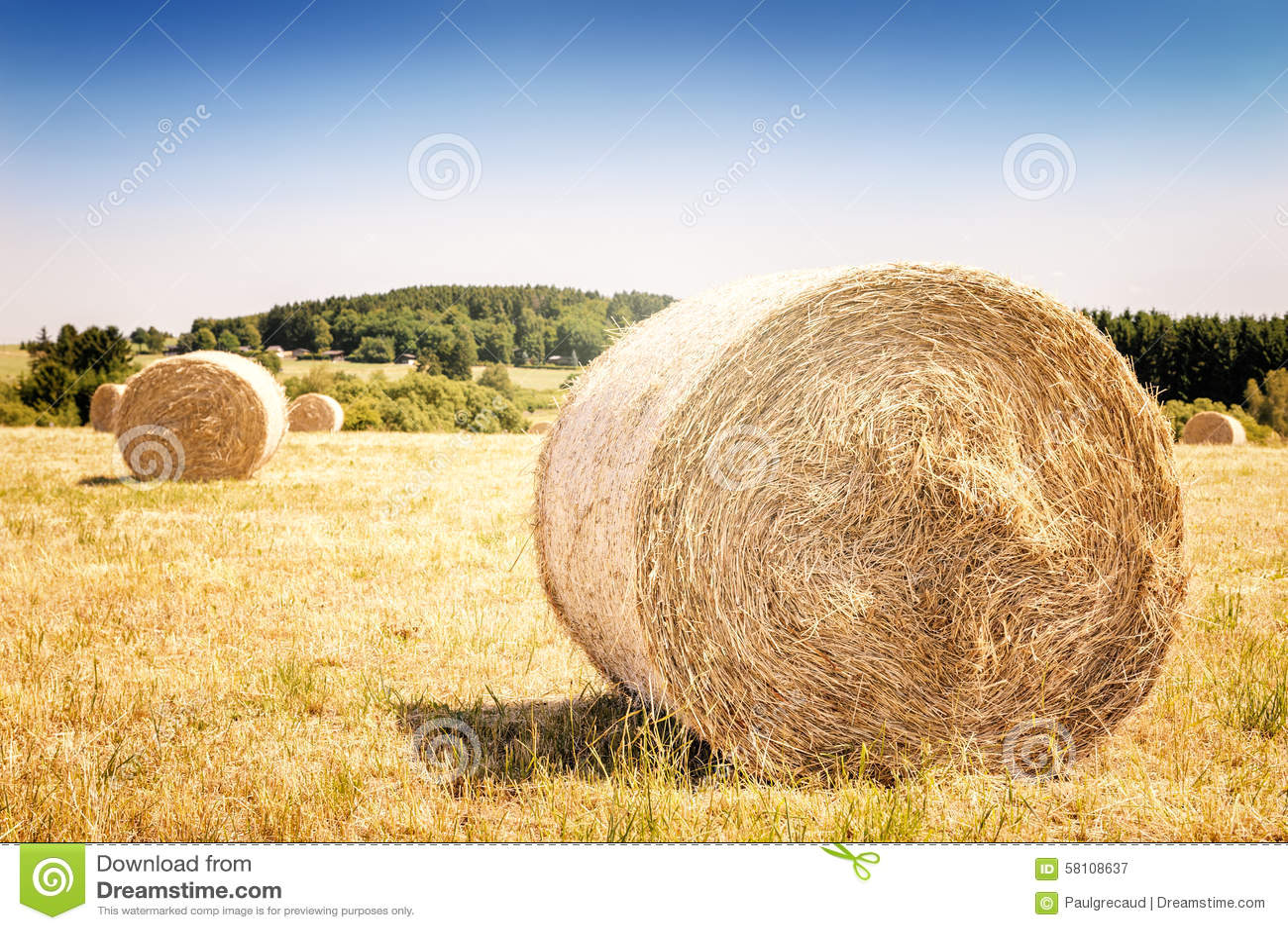 Guld- höbaler på det jordbruks- fältet