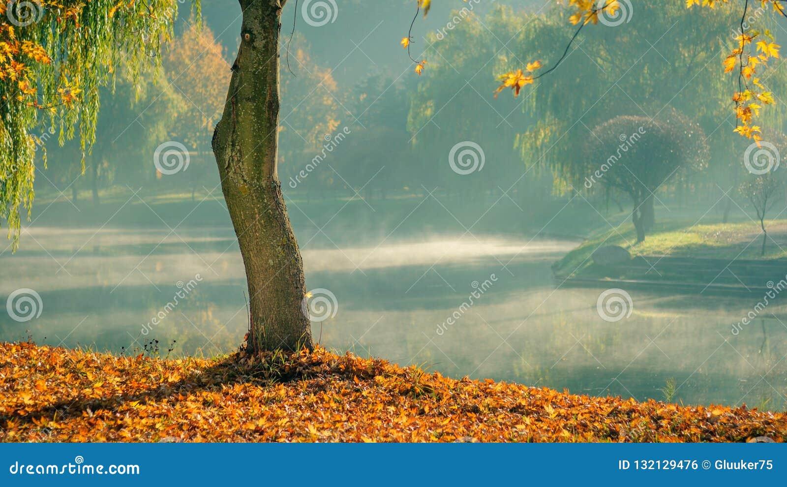 Guld- höst ensamt kalt träd med stupade sidor på kusten mot bakgrunden av ljus morgonmist över vattnet i