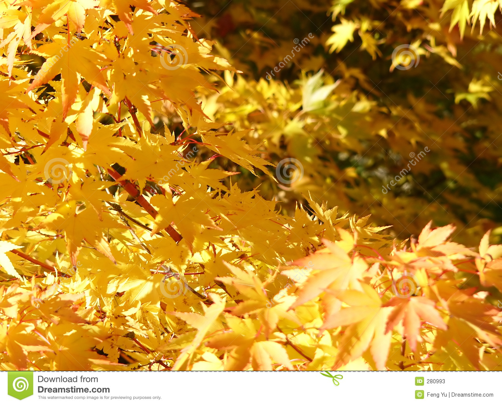 Guld- leaves
