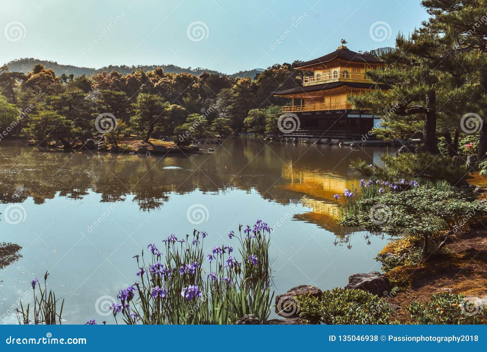 Guld- paviljong Kinkakuji på sjön under våren i Kyoto Japan