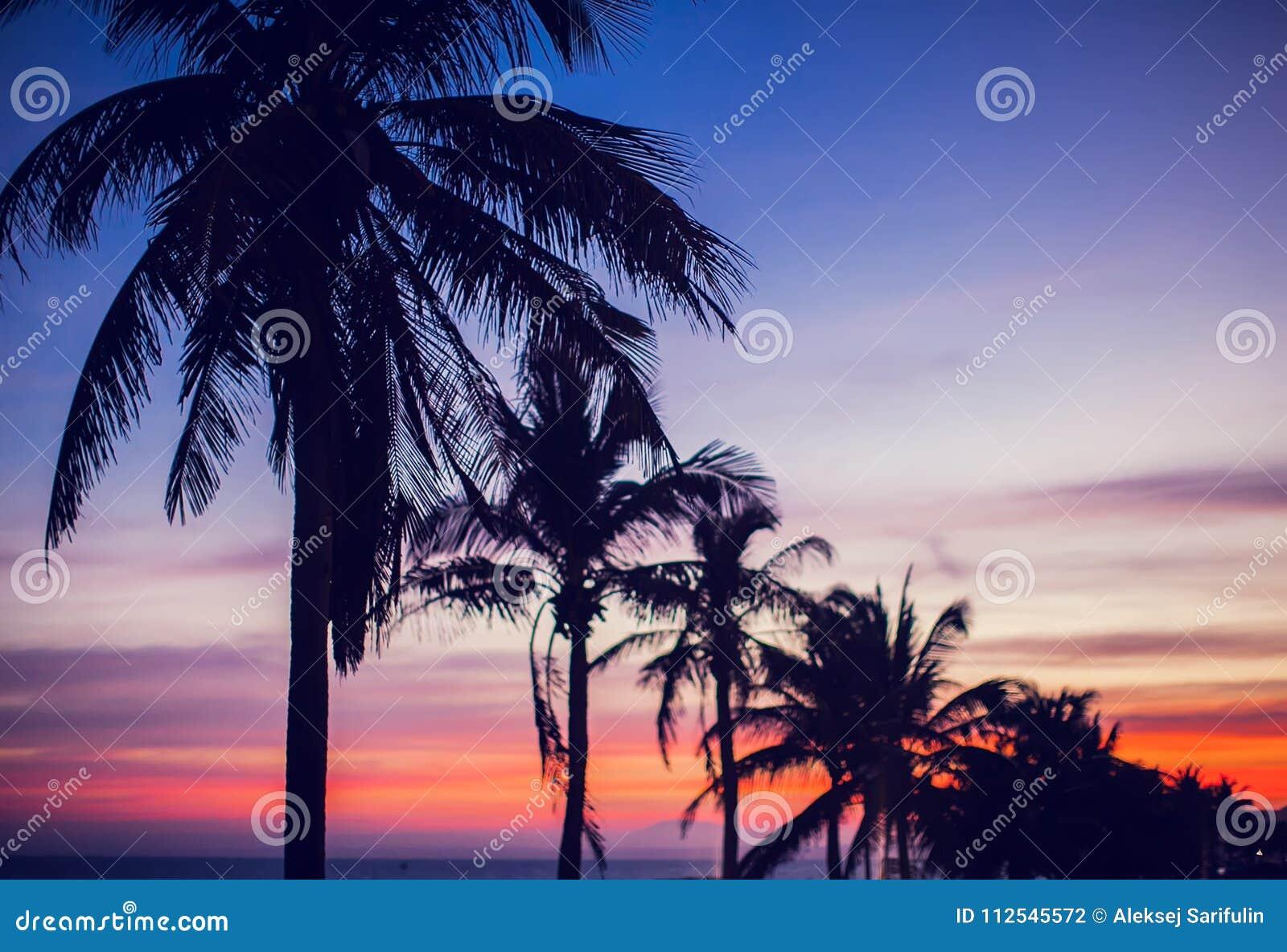 Guld- röd blå himmel för palmträdsolnedgång