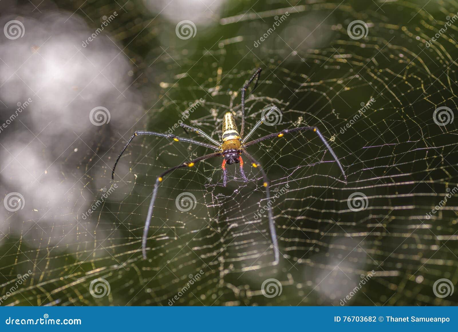 Guld- siden- orb-vävare spindel i den oskarpa naturliga bakgrunden