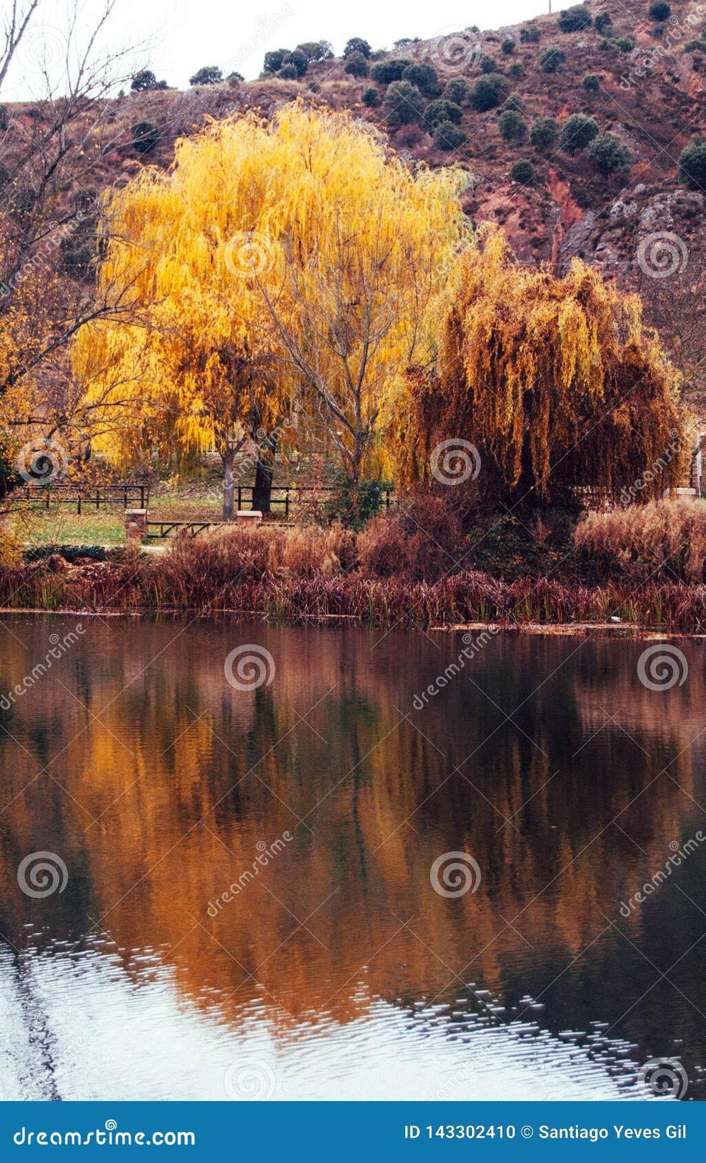 Guld- träd bredvid den Duero floden