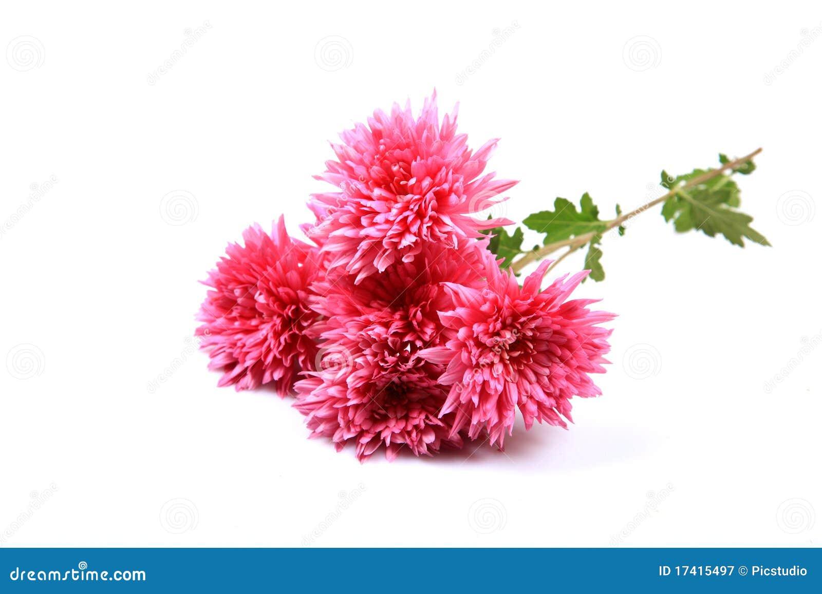 Guldaudi Blumen