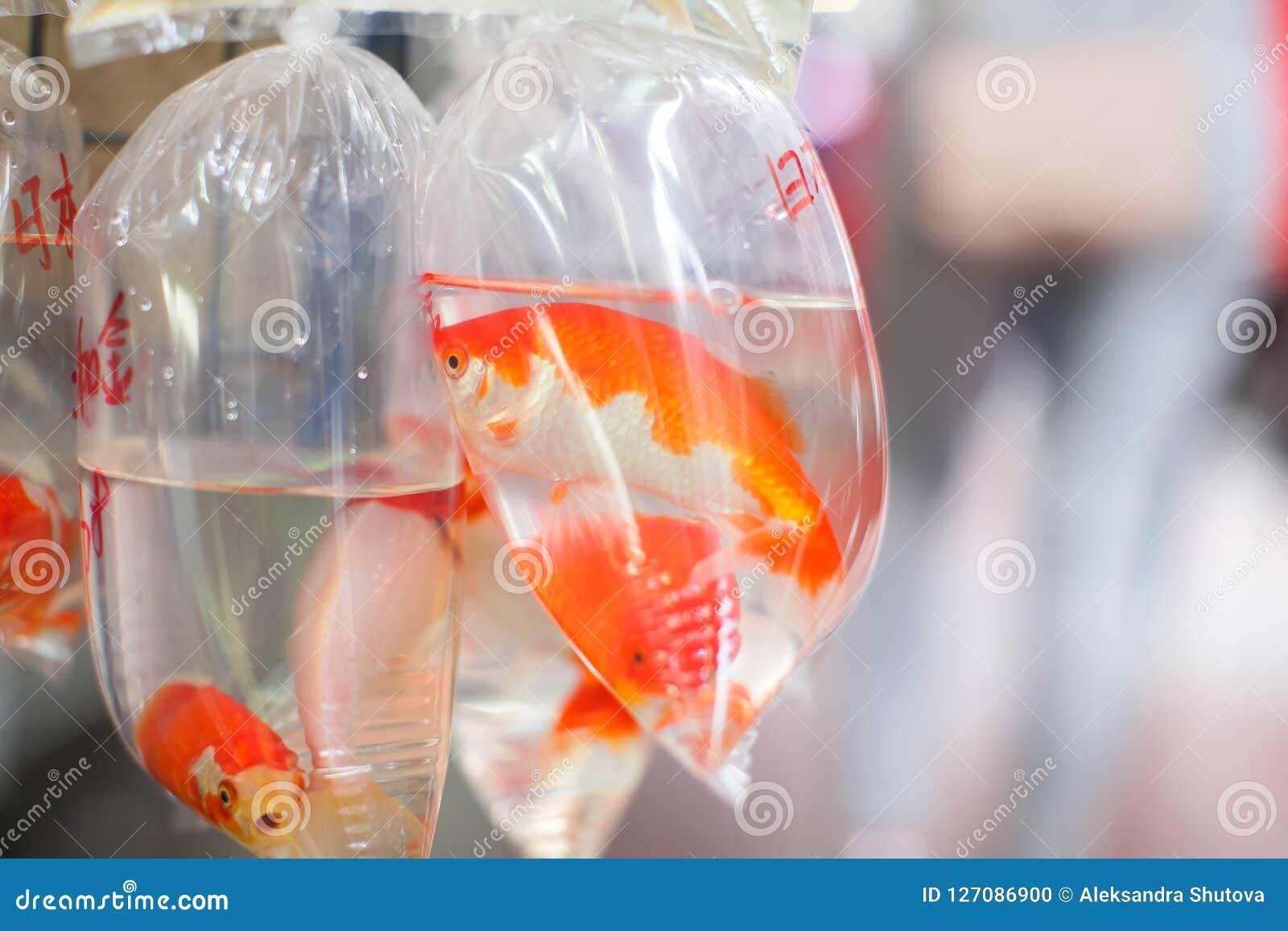 Guldfiskar och olika fiskar för akvarium i plastpåsar hängde på väggen i ett älsklings- shoppar att sälja i Hong Kong
