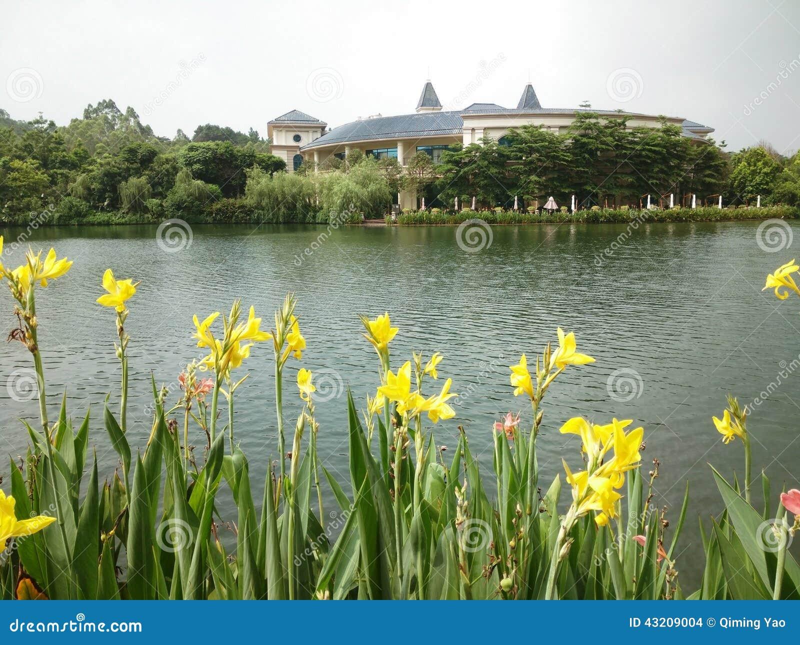 Download Guling blommar nära sjön arkivfoto. Bild av klubba, yellow - 43209004