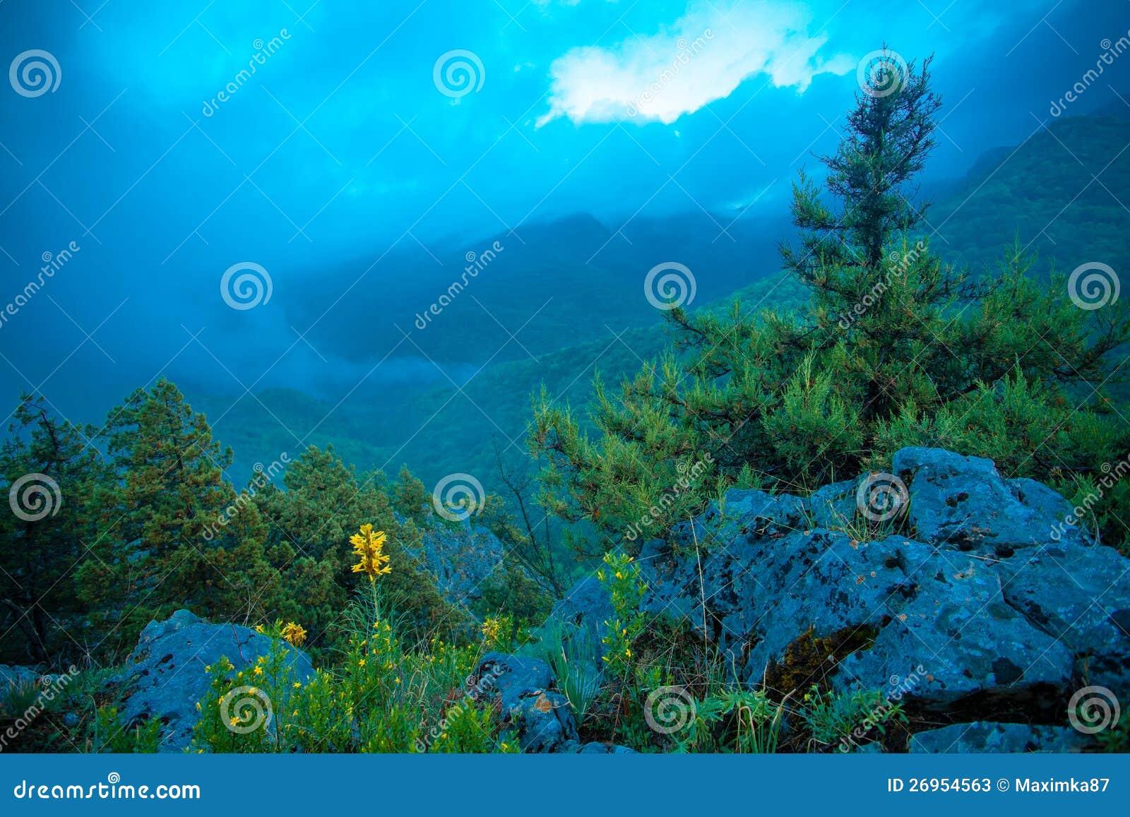 Gulingen blommar kick i de steniga bergen