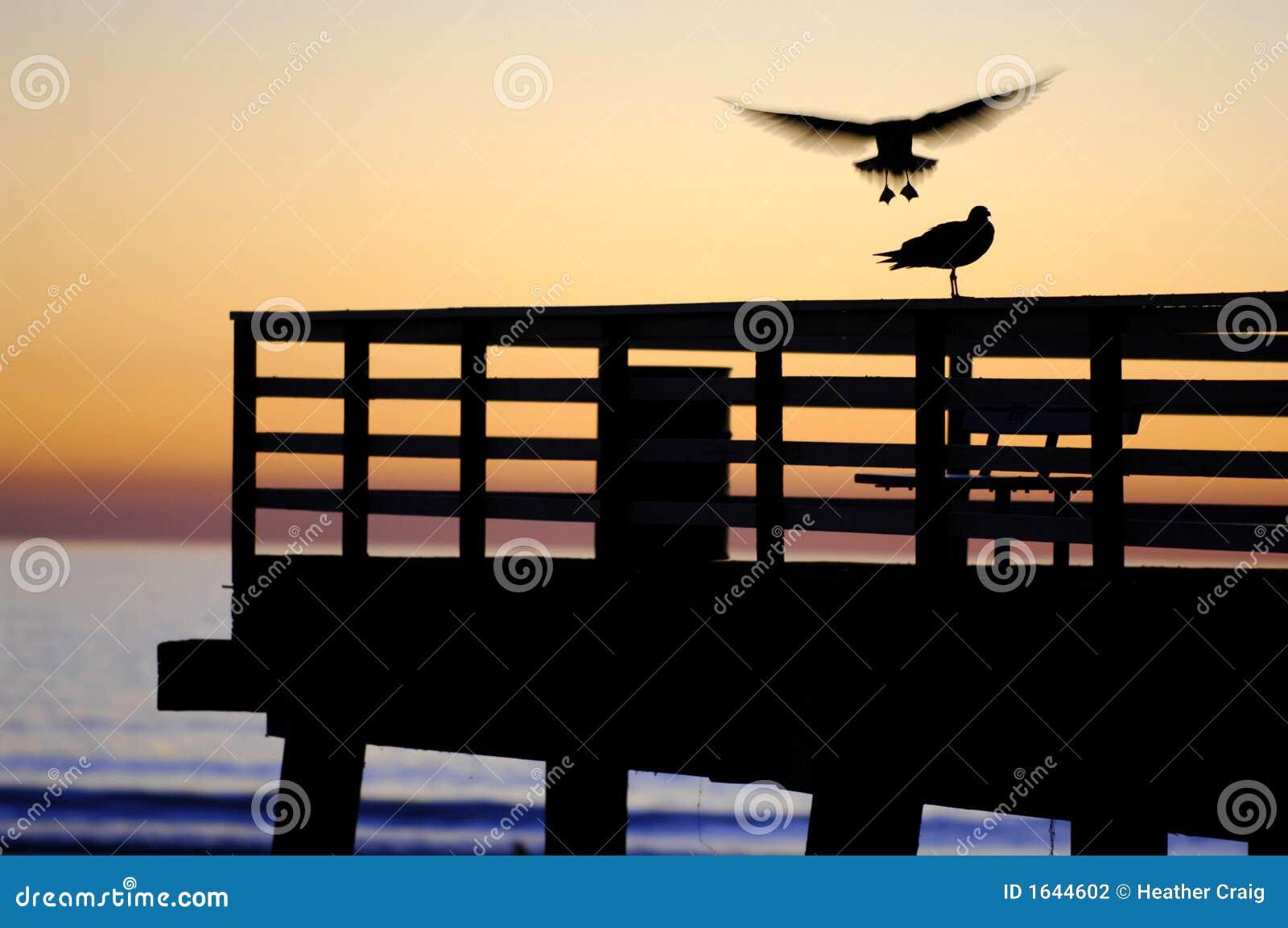 Gull Landing, Sunset on the Pier