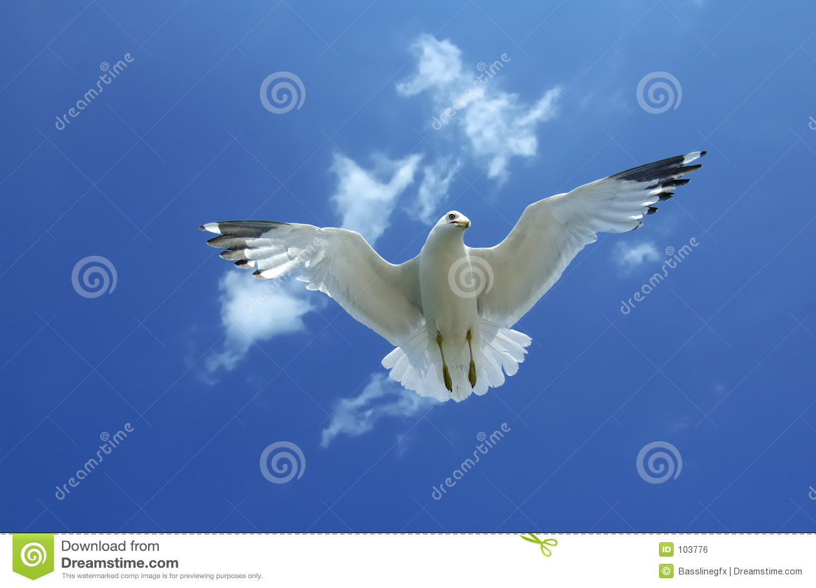 Gull Underneath - Lighther Blue