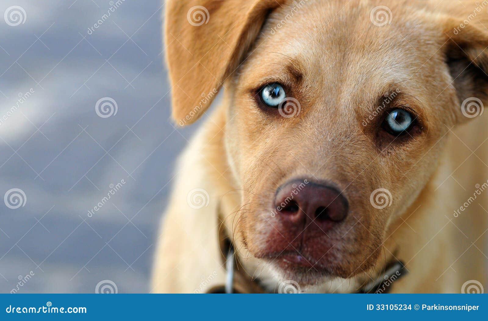 Gullig hund