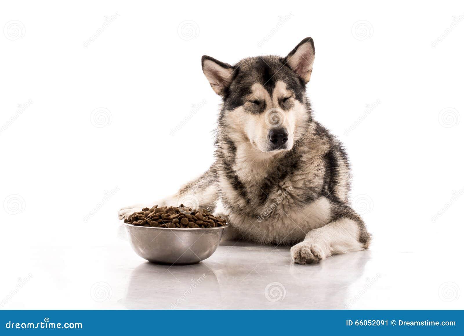 Gullig hund och hans favorit- torra mat på en vit bakgrund