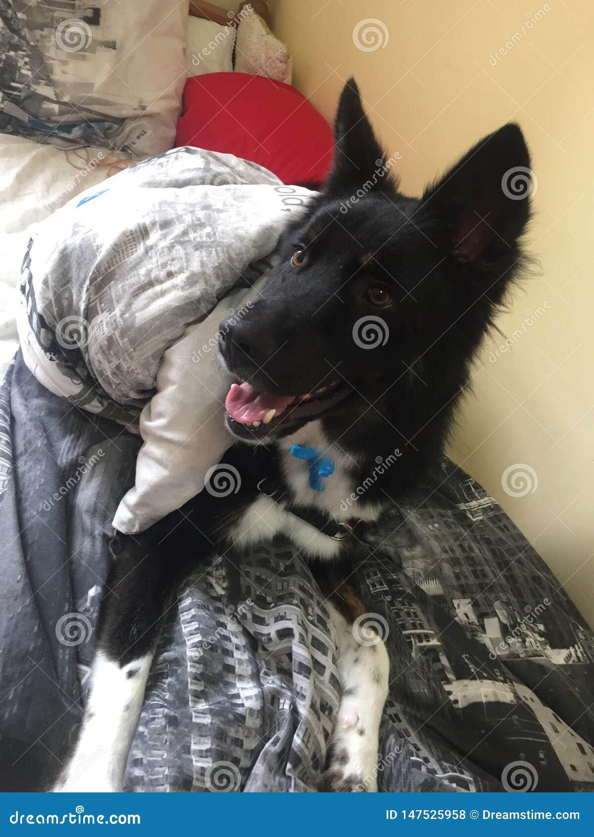 Gullig hund som ser kameran