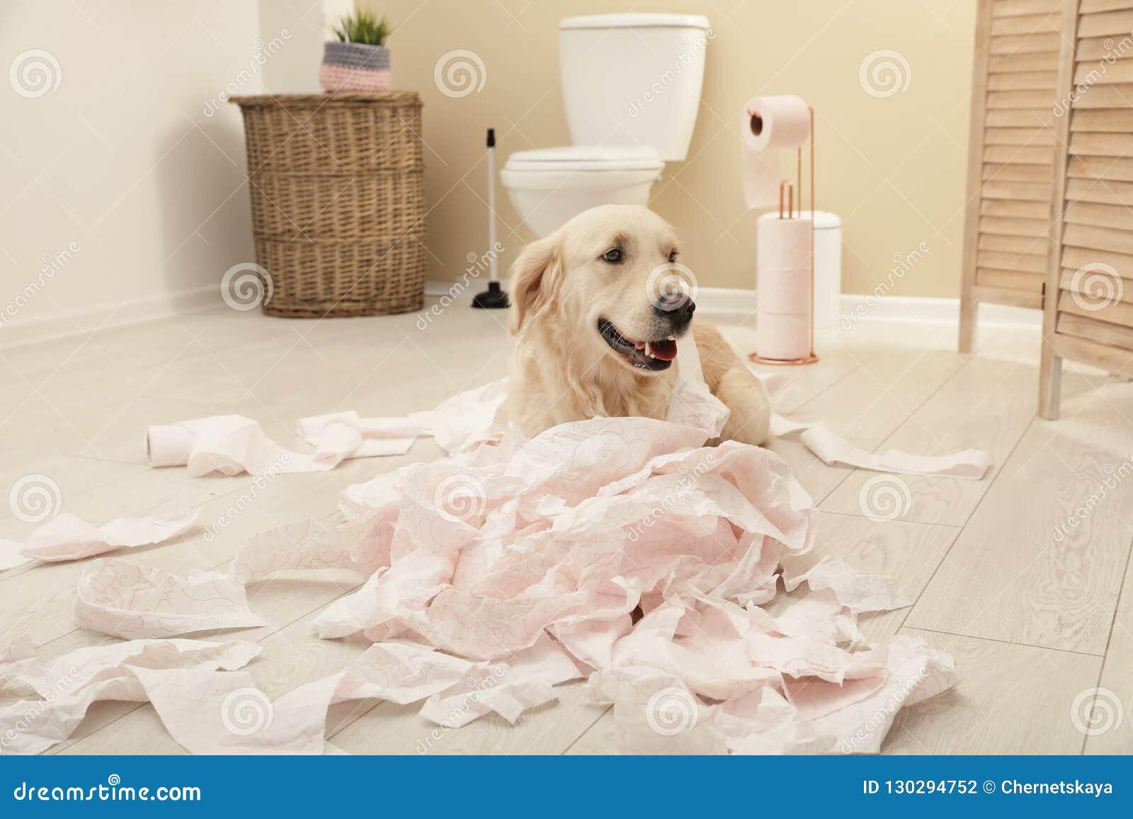 Gullig hund som spelar med toalettpapper i badrum