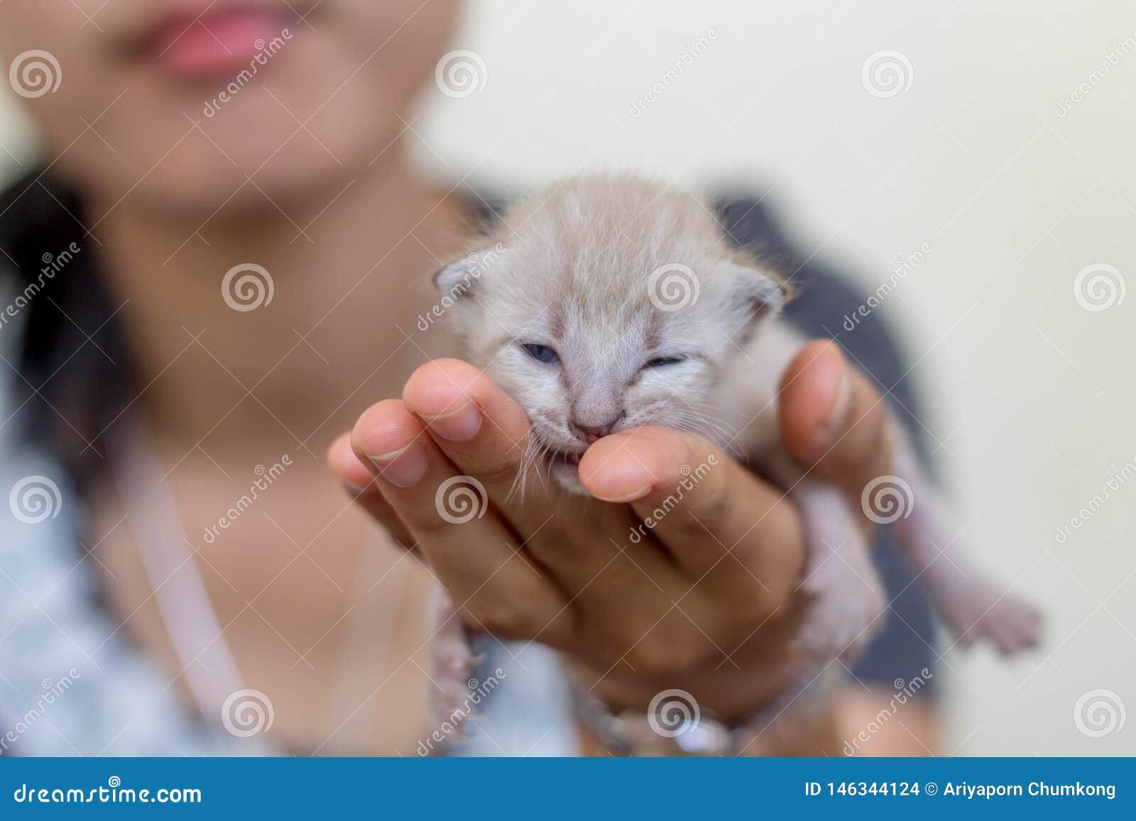 Gullig inhemsk nyf?dd kattunge
