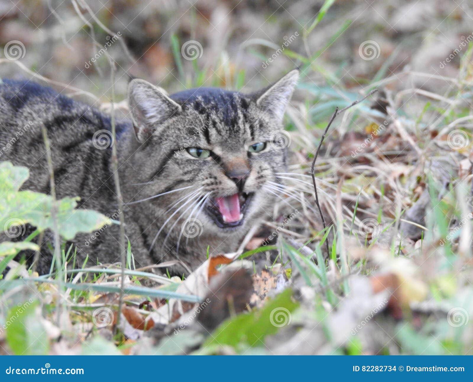 Gullig katt