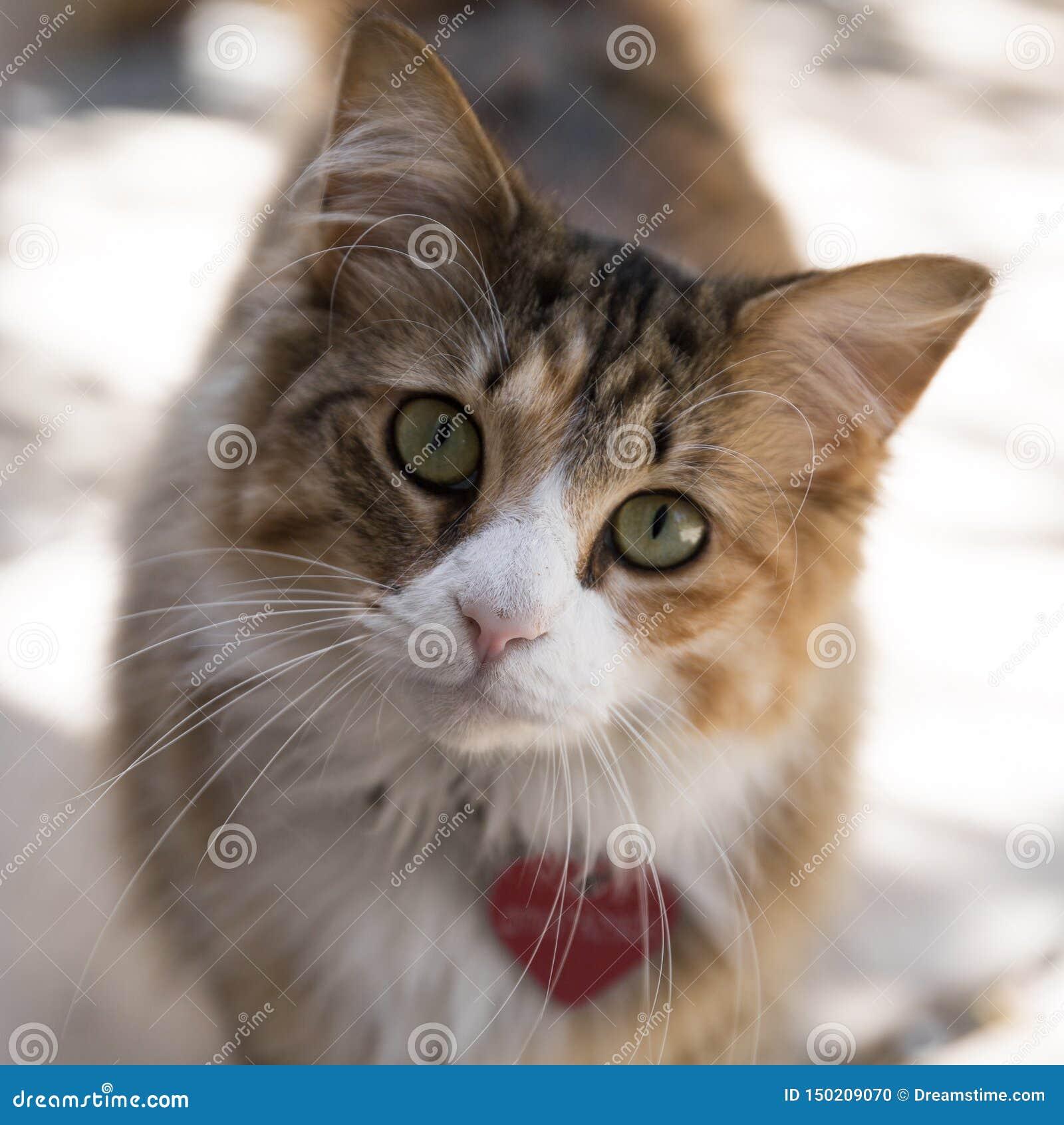 Gullig katt med hjärtaetiketten