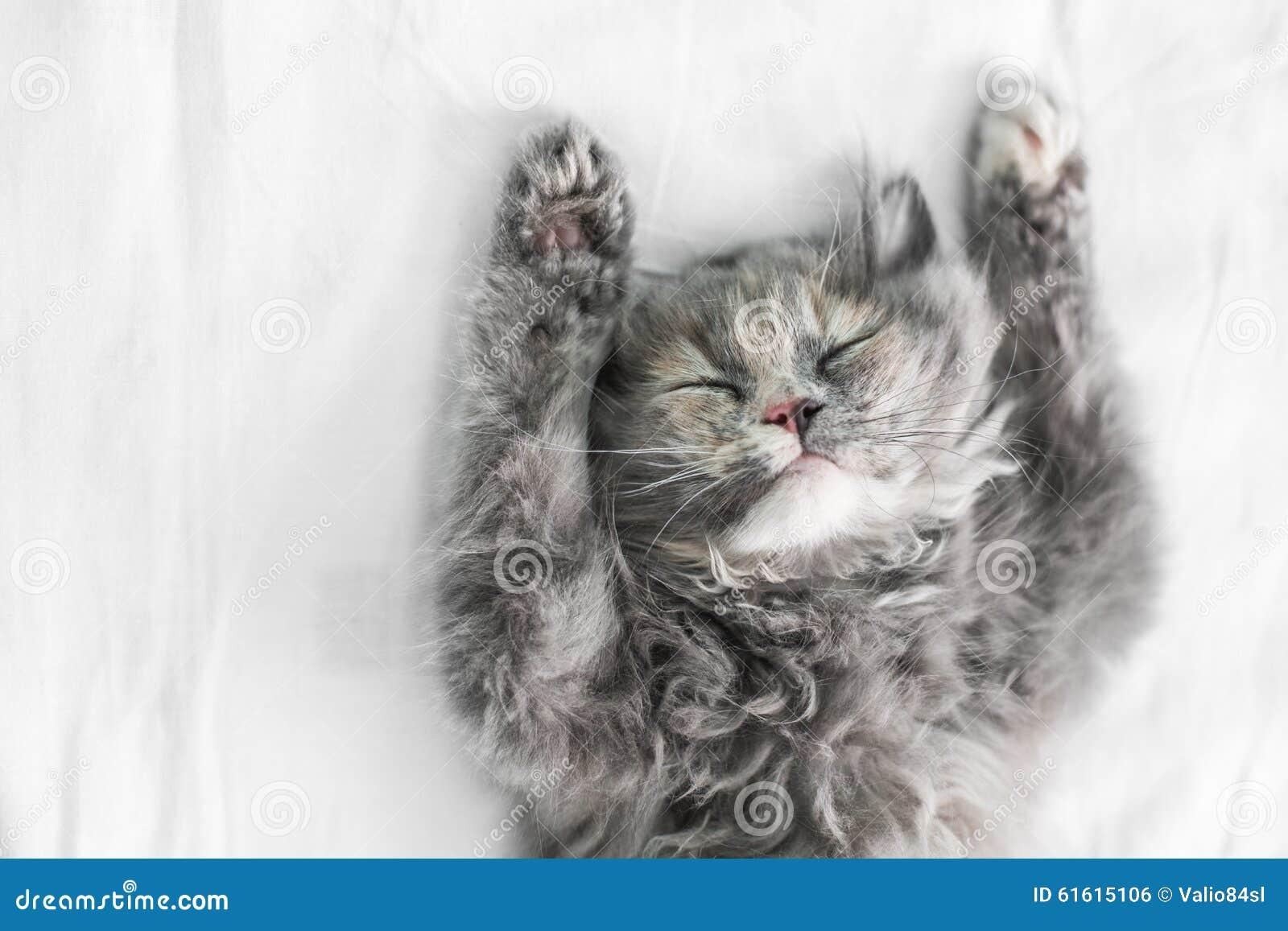 Gullig katt som sover på sängen