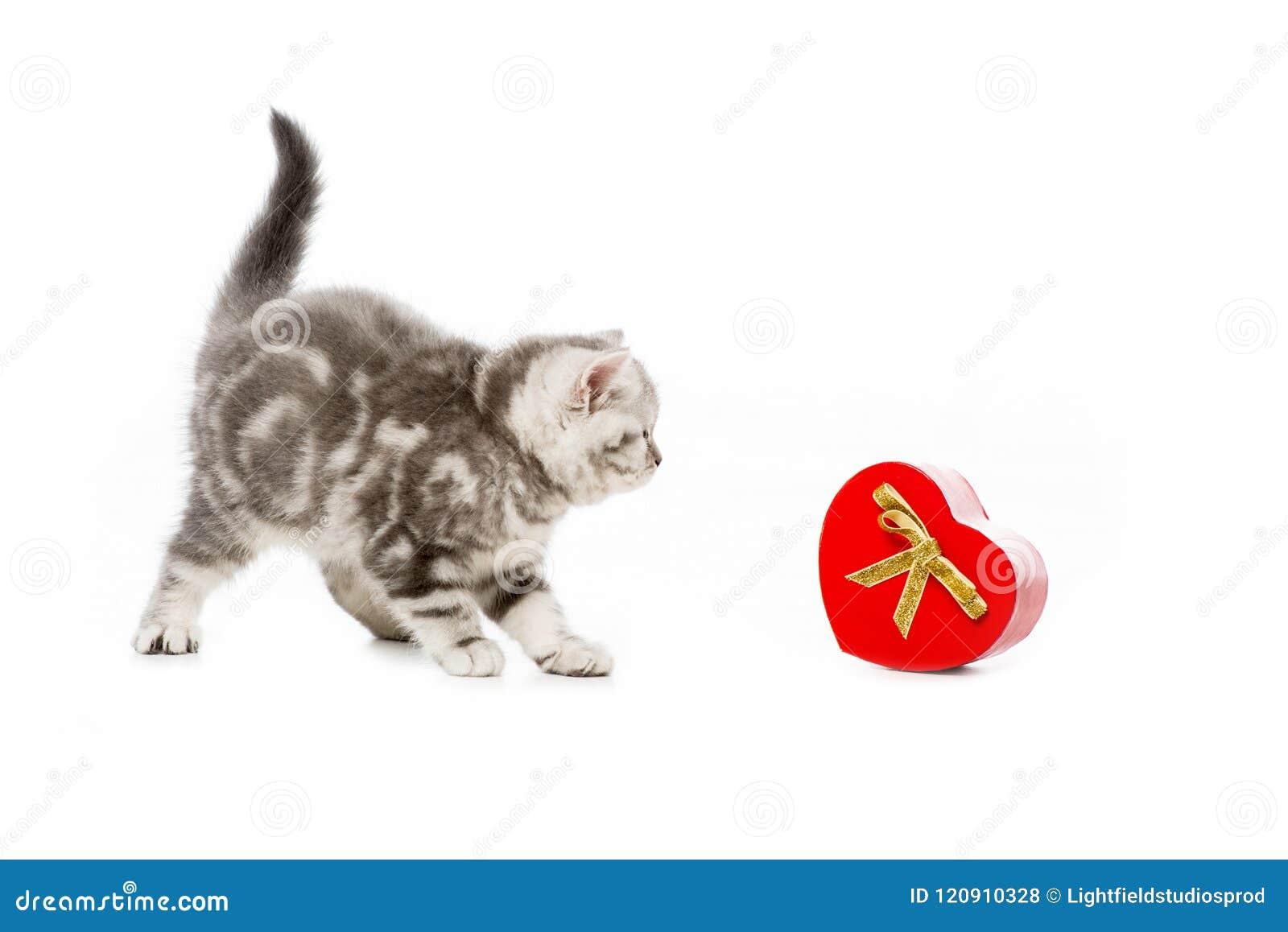 Gullig liten kattunge med den hjärta formade gåvan