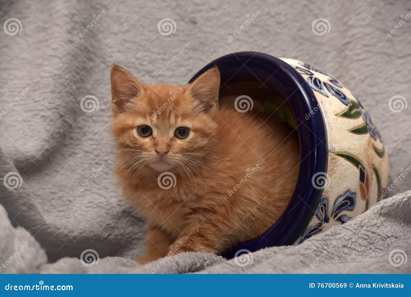 Gullig ljust rödbrun kattunge och en blomkruka
