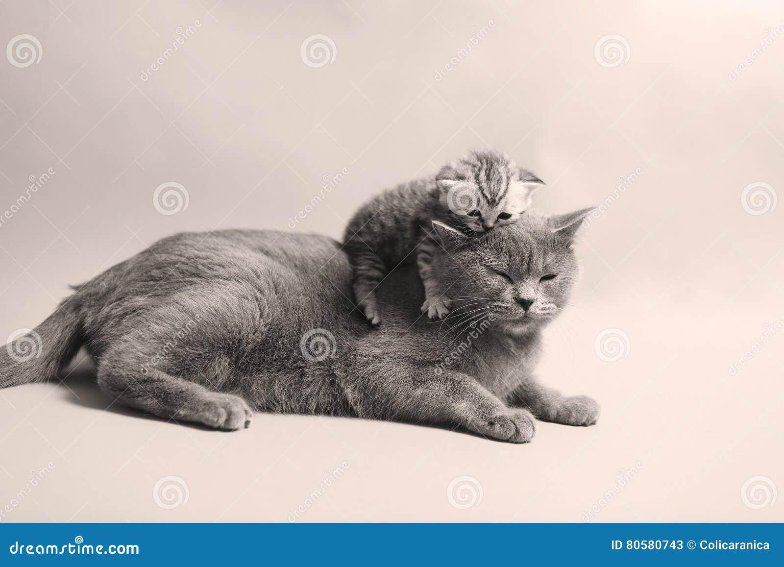 Gullig nyligen uthärdad kattunge