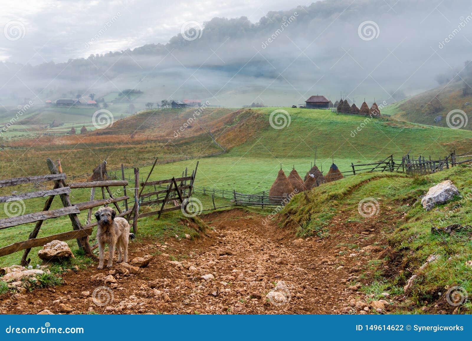 Gullig vakthund som bevakar ing?ngen till livlig och hisnande avl?gsen landsbygd, Fundatura Ponorului, Rum?nien