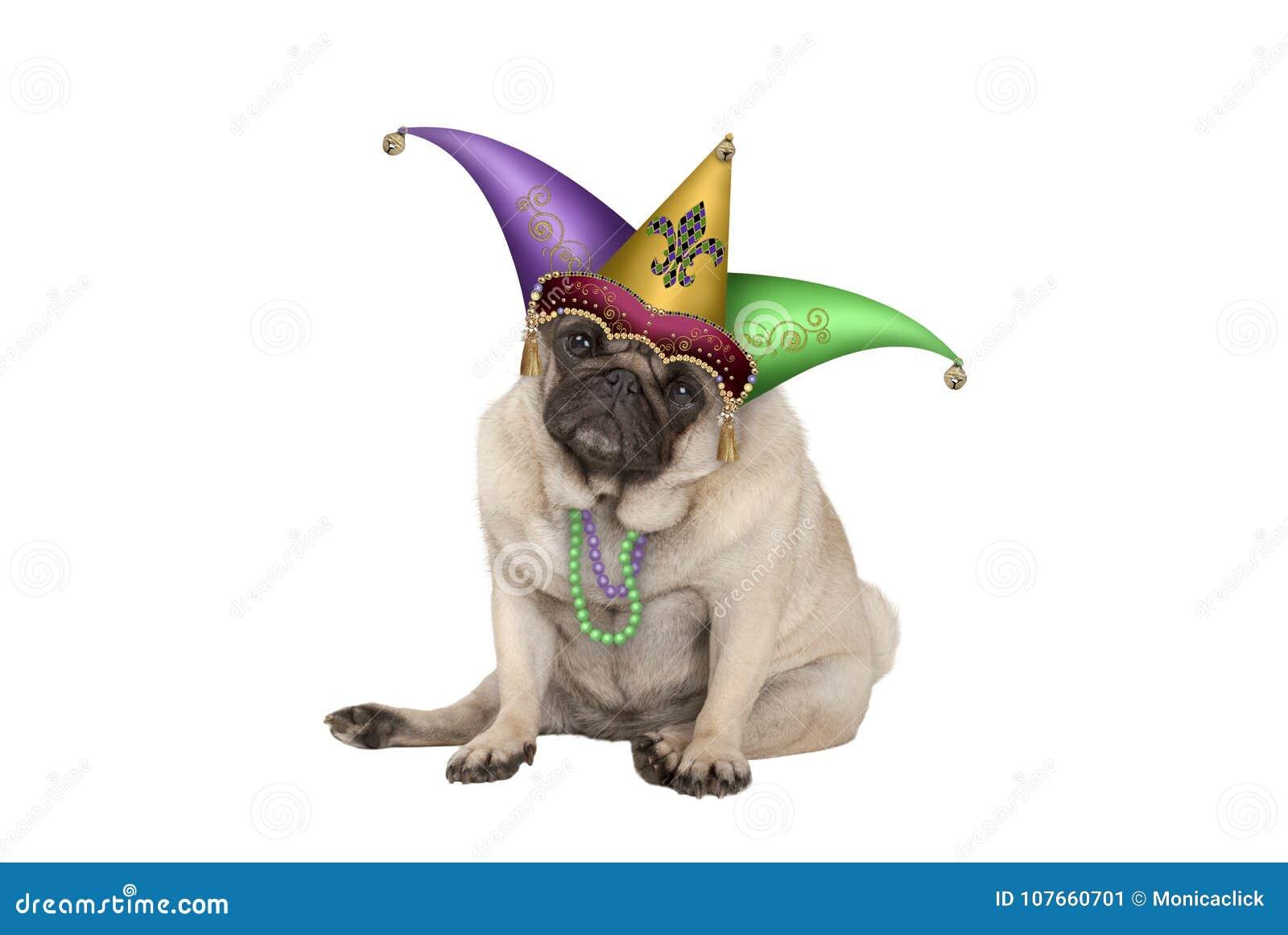 Gullig vresig hund för valp för mops för Mardi graskarneval som ner sitter med harlekingyckelmakarehatten