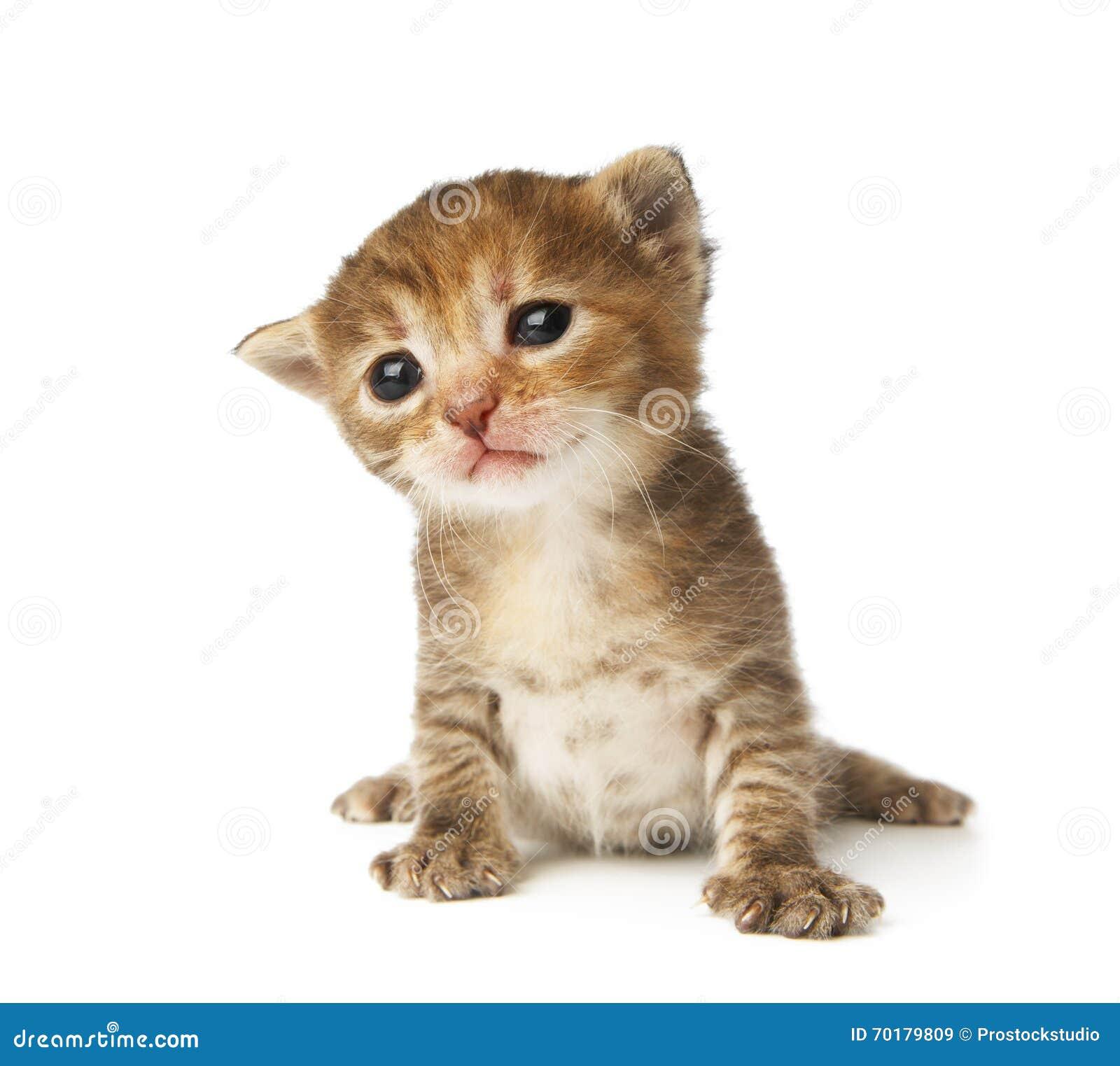 Gulliga grå färger gjorde randig den isolerade kattungen