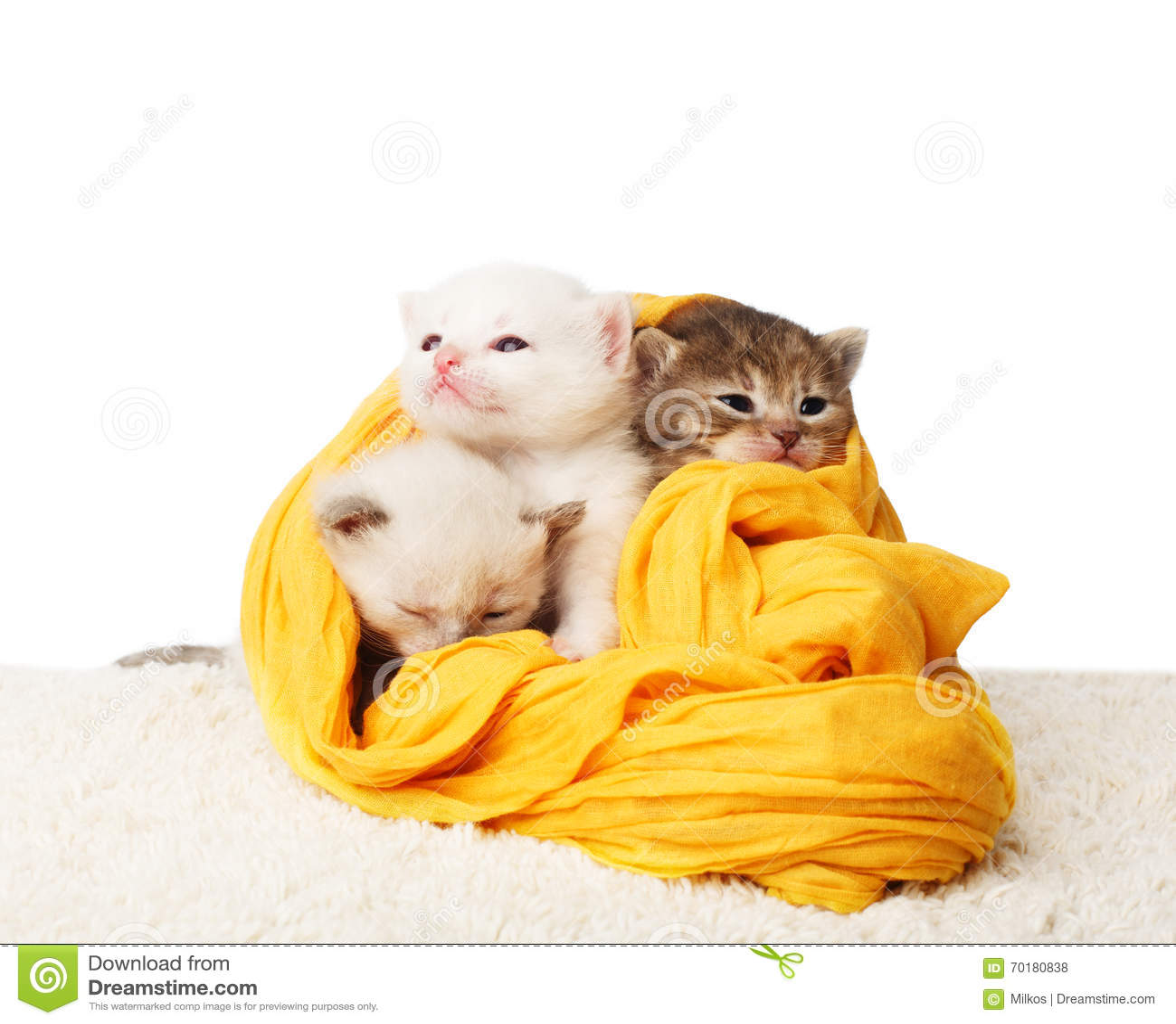 Gulliga kattungar i isolerad gul bomull