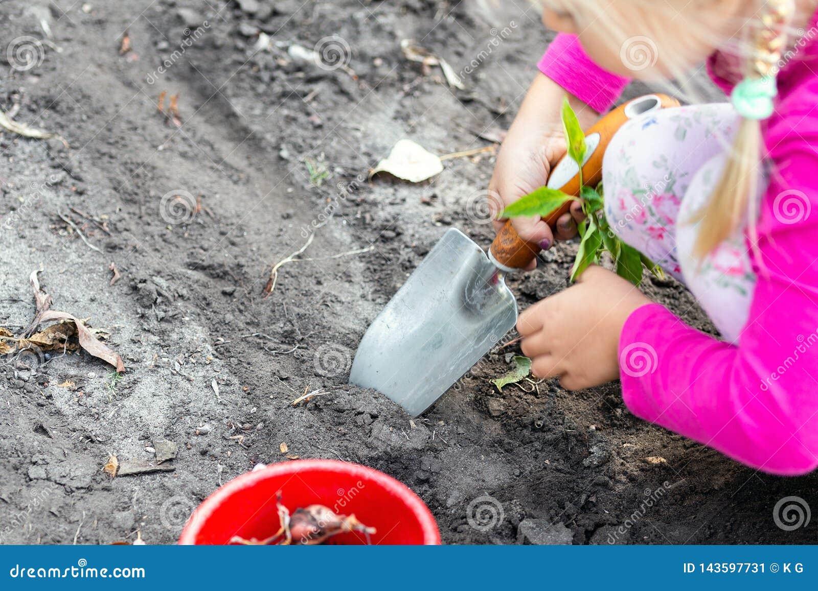 Gulliga små behandla som ett barn flickan som planterar tulpankulaplantor Trädgårdsmästarebegrepp för litet barn Utomhus- barnakt