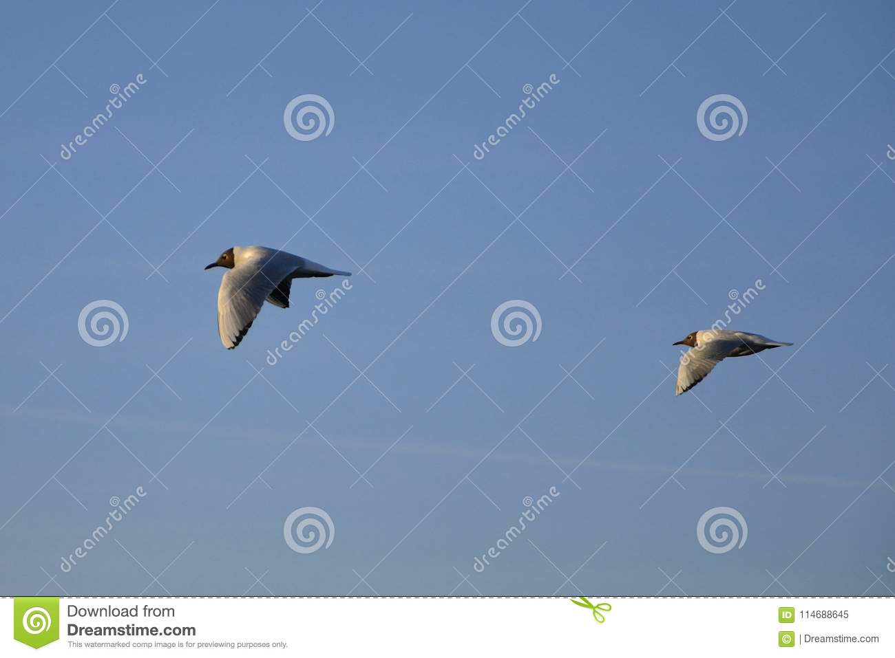 Gulls flying over the water.