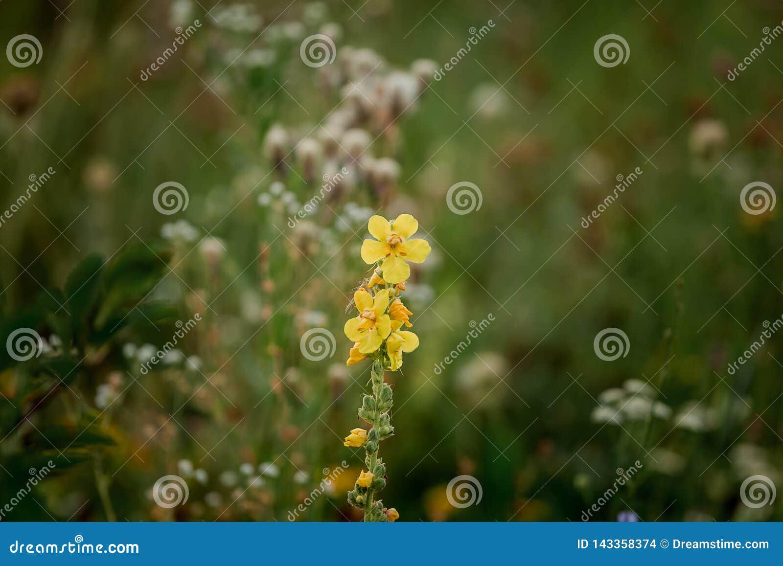 Gulna blommor Att blomma fjädrar Andedräkt av våren