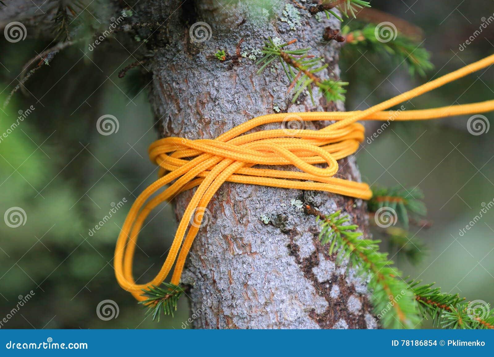 Gult rep på träd