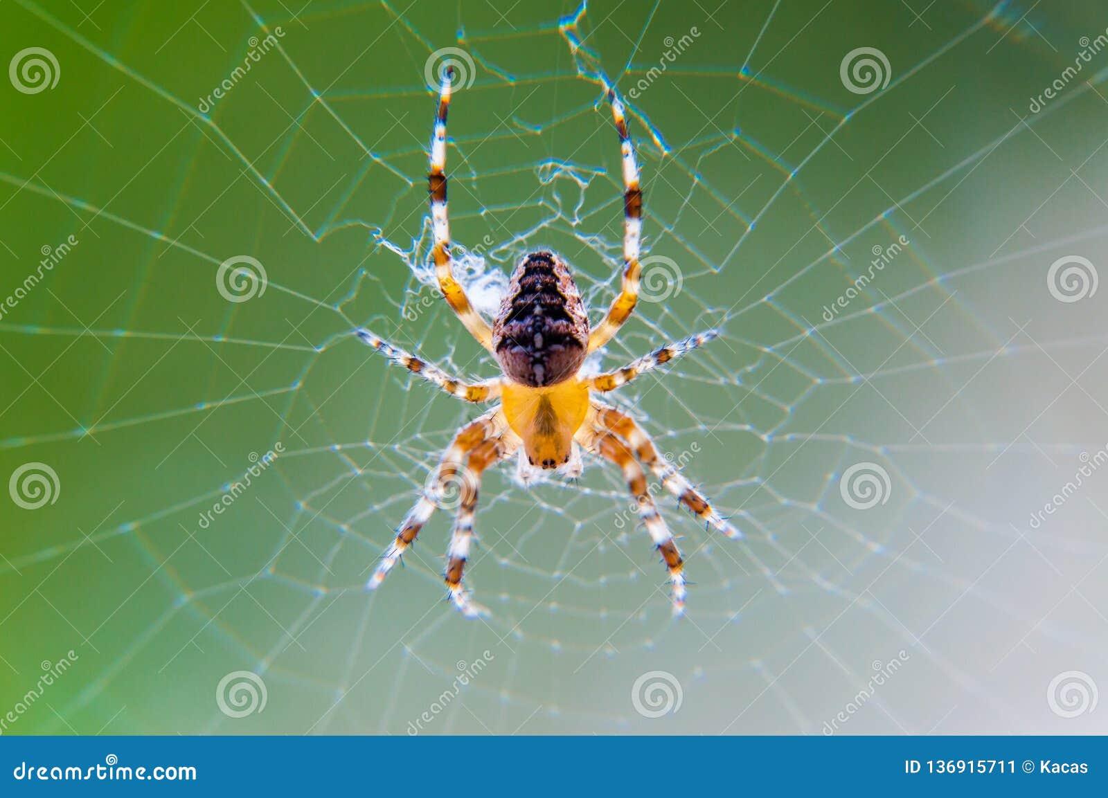 Gult svart Orb-vävare spindelAraneid kryp som sitter på hans spiderweb på grön suddig bakgrund