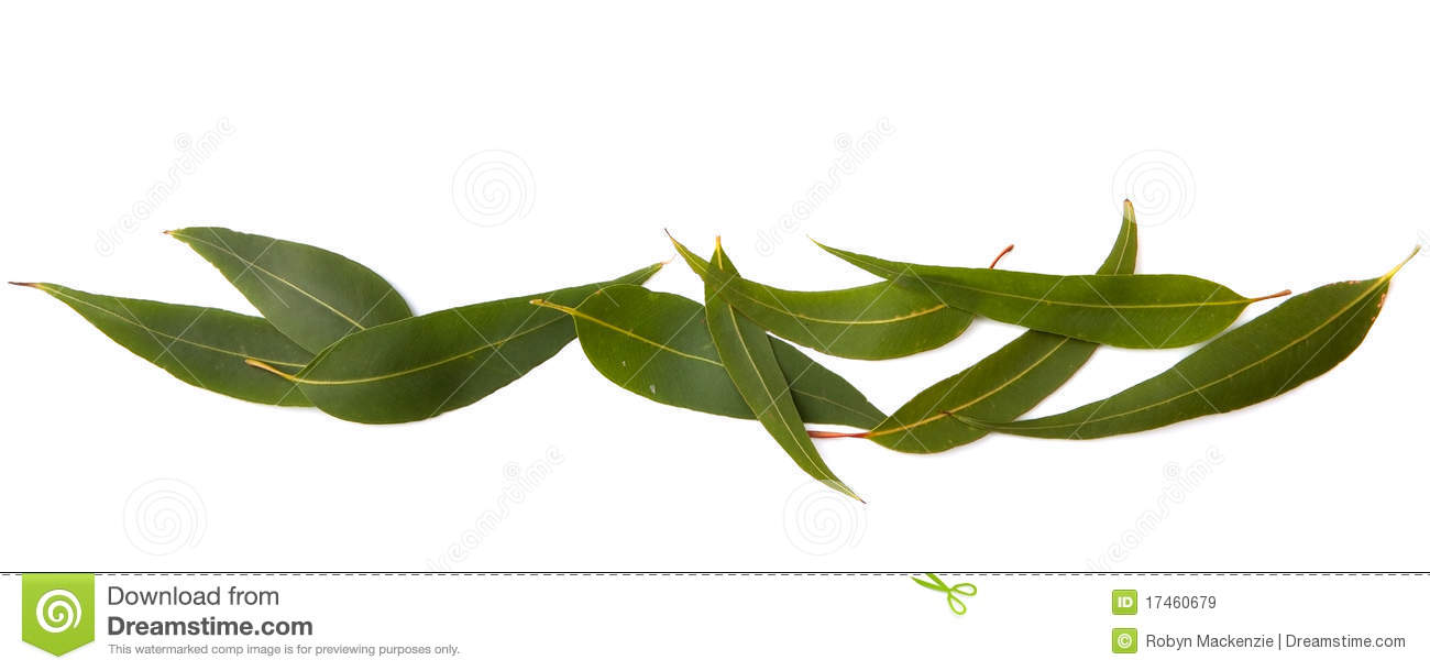 Gum Leaves Border Royalty Free Stock Images Image 17460679