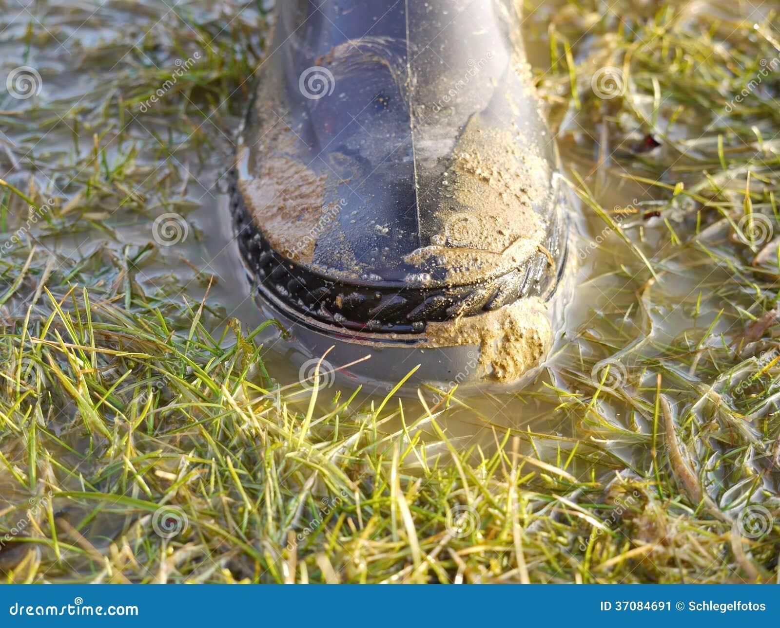 Download Gumowy but w trawie obraz stock. Obraz złożonej z kałuża - 37084691