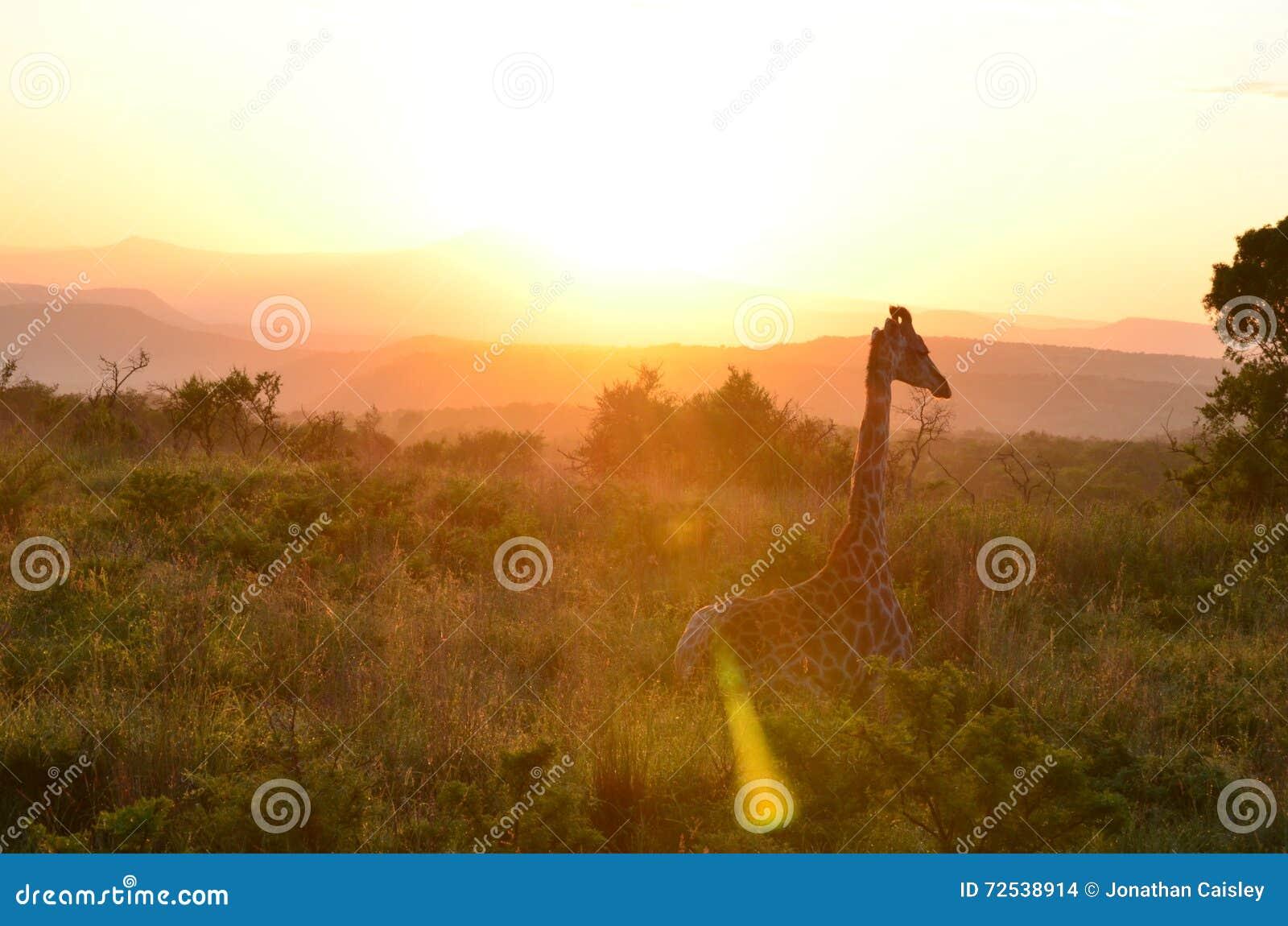 Guten Morgen Stockfoto Bild Von Hügel Ebene Abend 72538914